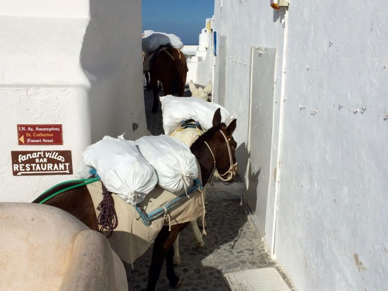 Donkeys ladened with stones for building construction in Santorini in winter