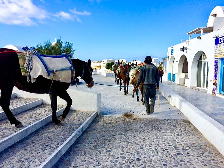 Donkeys being walked through Oia, Santorini