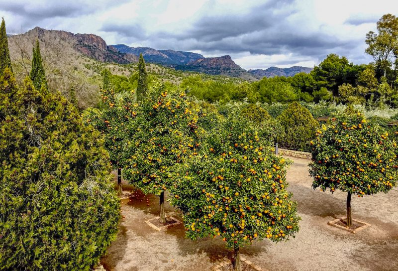 Sierra Espuna orange trees