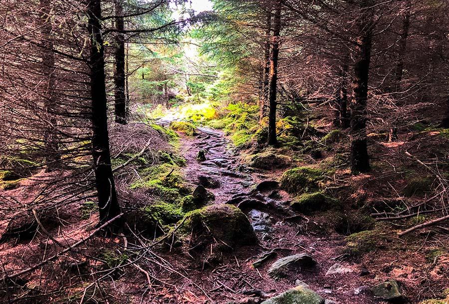 Skudeneshavn forest