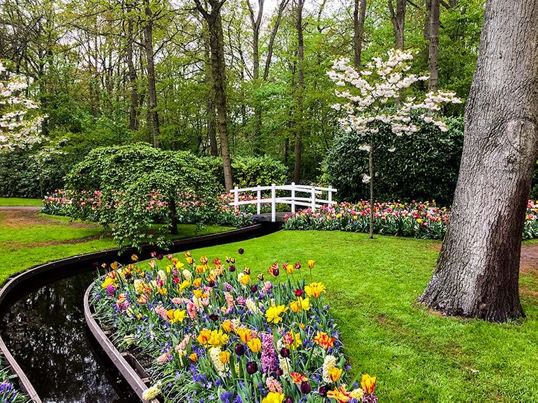 Garden scene at keukenhof holland - small white bridge over thin stream edged with tulips