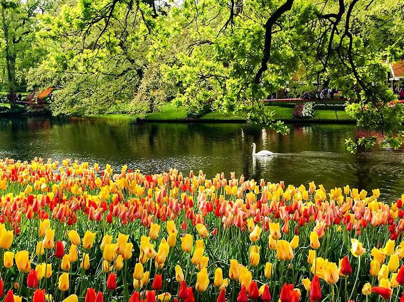 Keukenhof Holland – Europe's Spring Garden