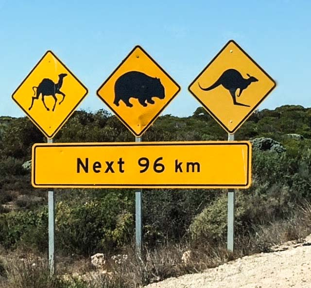 The sign on the Nullarbor Drive showing camels, wombats and Kangaroos.