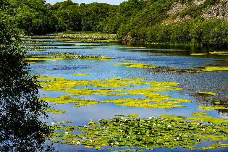 View of the lily pads at Bosherton Lakes in Wales