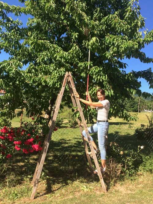 Cherry picking at Plitvice Lakes Campsite, Croatia