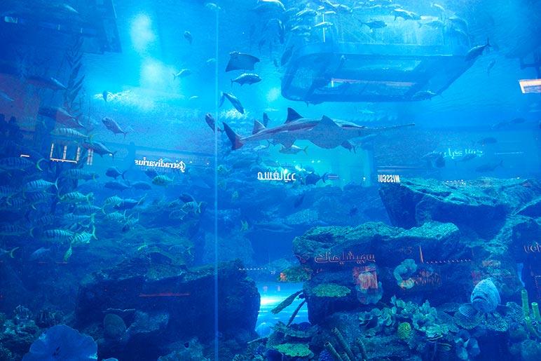 The Dubai Aquarium is mesmerising