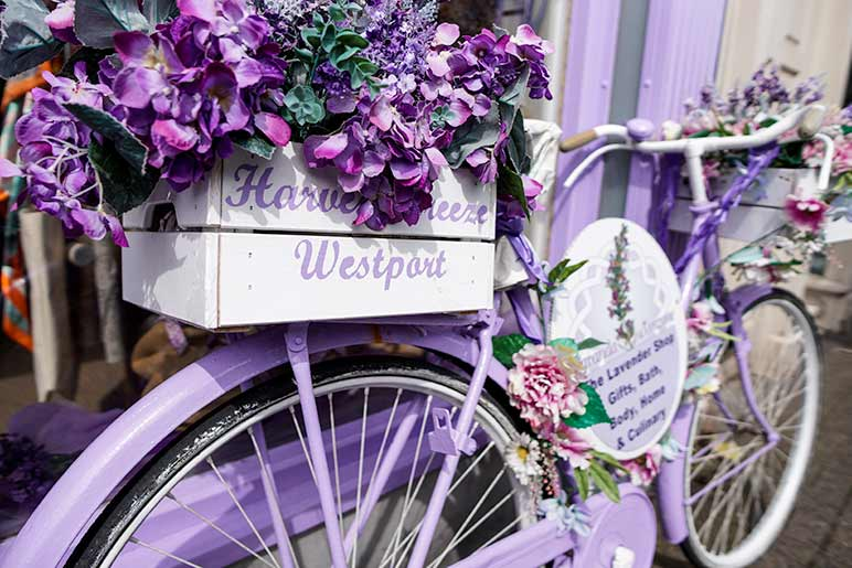 A purple bicycle in Westport adorned with flowers