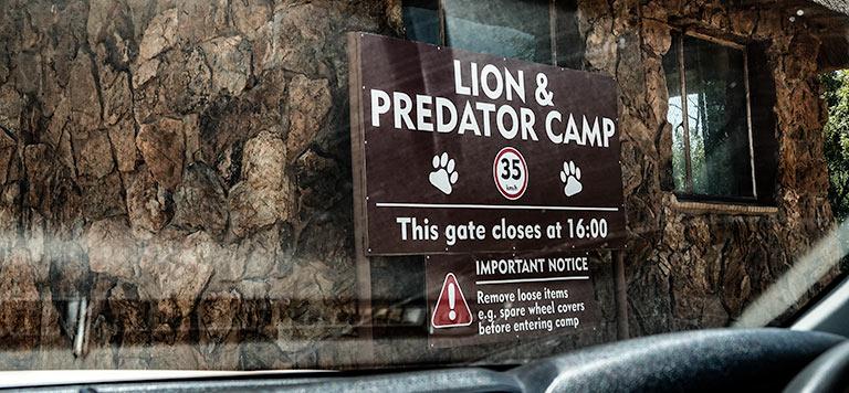 Lion and predator Camp sign