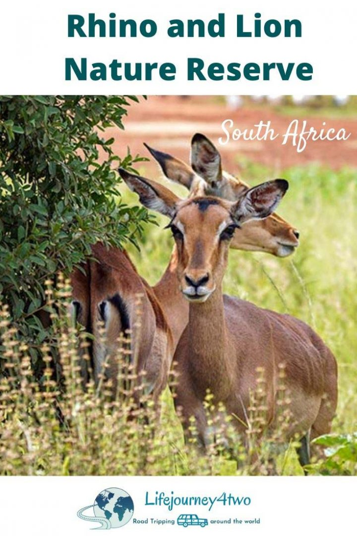 Rhino and Lion Park Pinterest Pin 2