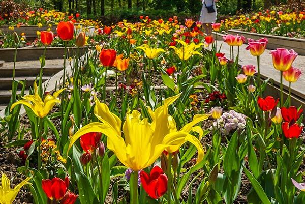 Parc Floral Vincennes - Paris 2 day itinerary