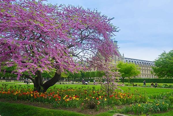 Tuilerie Gardens 2 - Paris 2 day itinerary