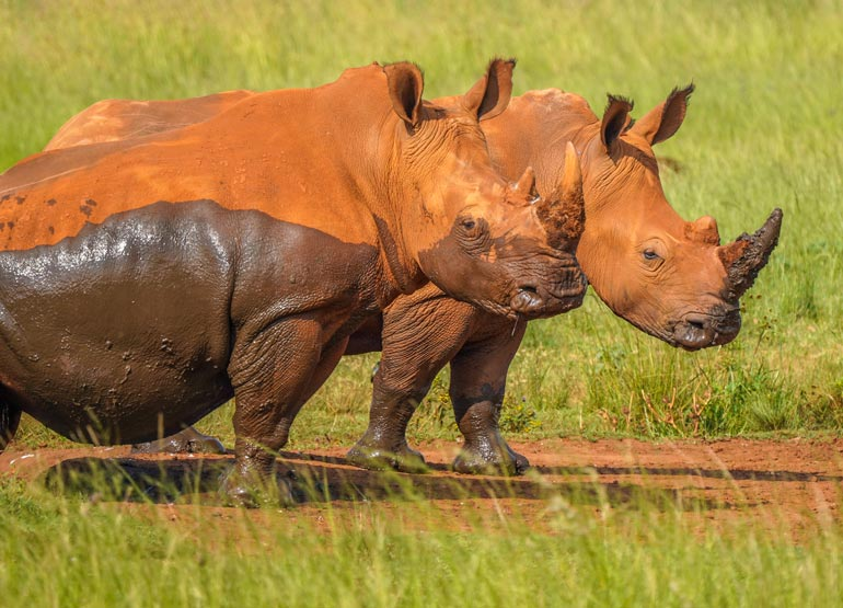 African wildlife photography photo