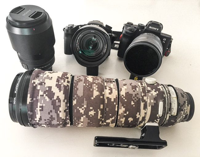 Our Sony cameras and lenses - African Wildlife Photography