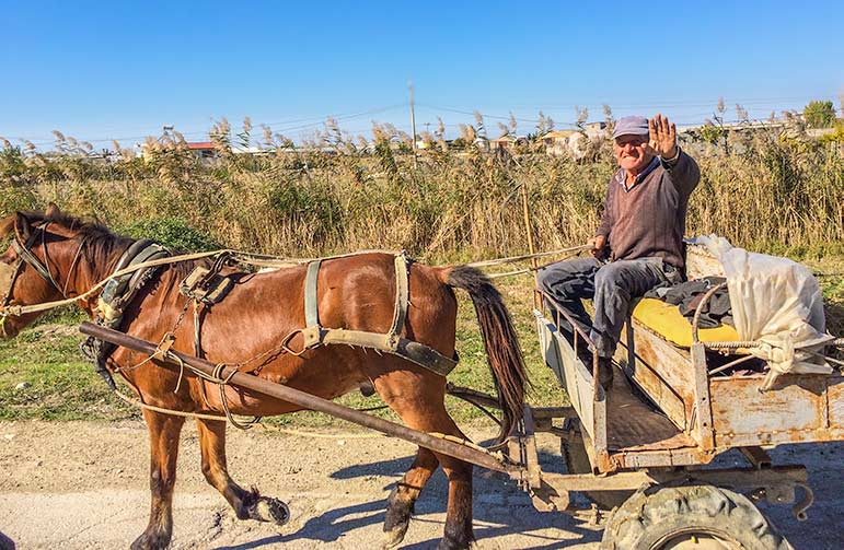 Horse driven cart on our Albania road trip