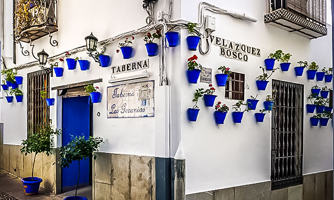 Many Blue plantpots hung on the white walls with red geraniums inside - In Cordoba, Spain