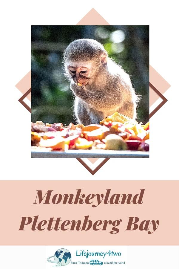 Monkeyland-Pinterest-Pin-2