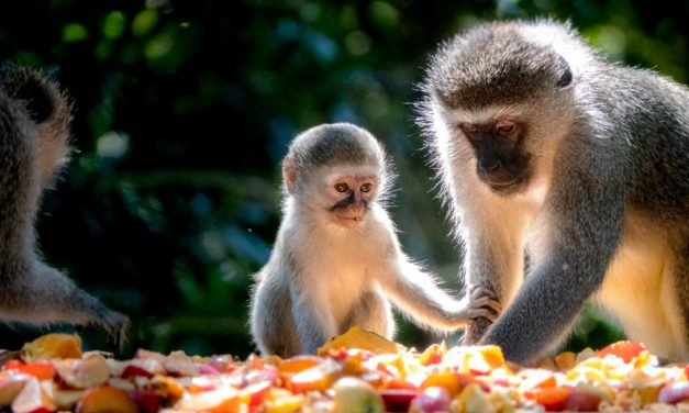 Monkeyland Plettenberg Bay: Furry Friends Afoot