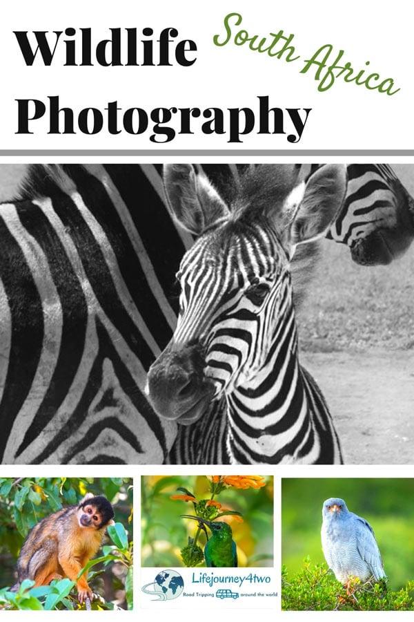 Africa Wildlife Photography pinterest pin