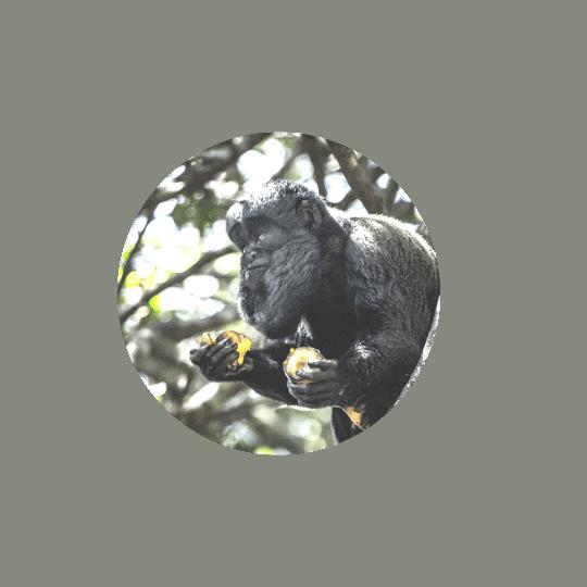 Monkeyland Plettenberg Bay Bearded Saki