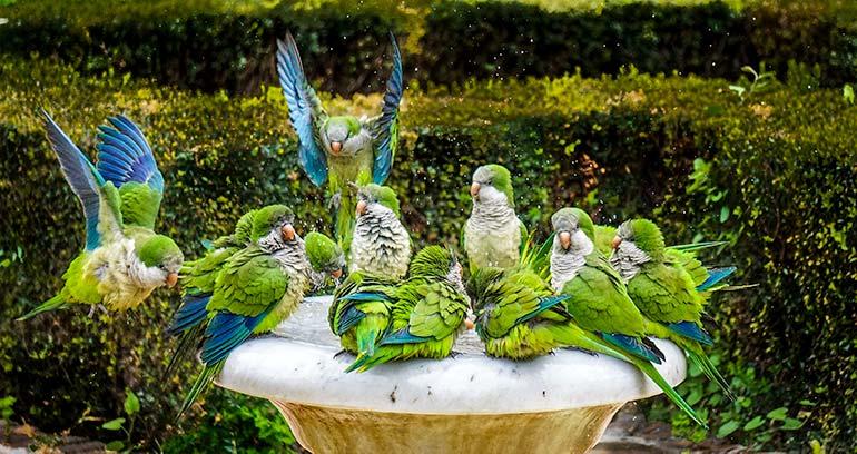 Parrots in Malaga