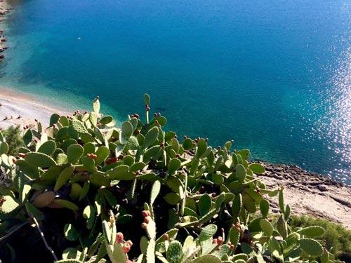 Nafplio cactus and ocean