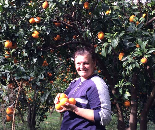 oranges-straight-from-the-tree