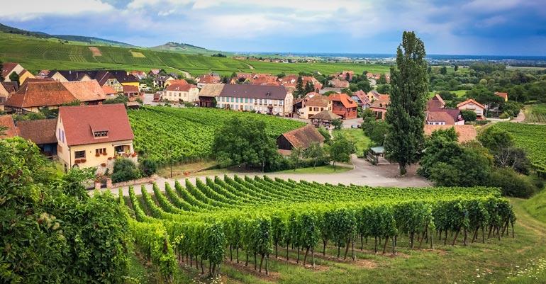 Hannawihr view of vineyards