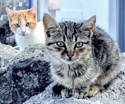 two kittens sitting on a wall in Greece