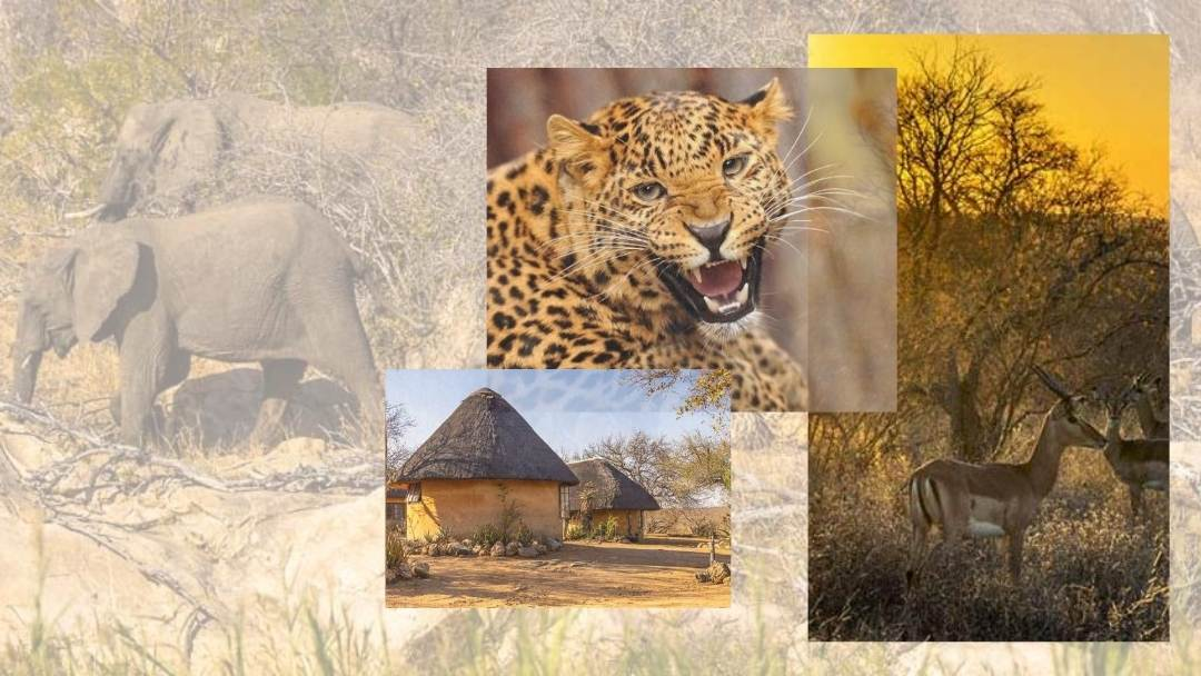 Conversation with a Leopard and Life in Klaserie