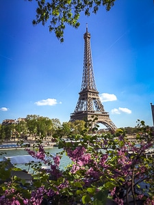 Eiffel tower paris with foreground of purple flowers