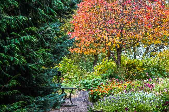 autumn red, orange colours of a botanical gardens, Iceland