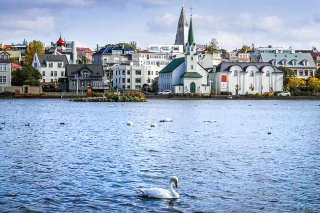 Tjornin-Lake, Iceland with a swan on the lake and church in background
