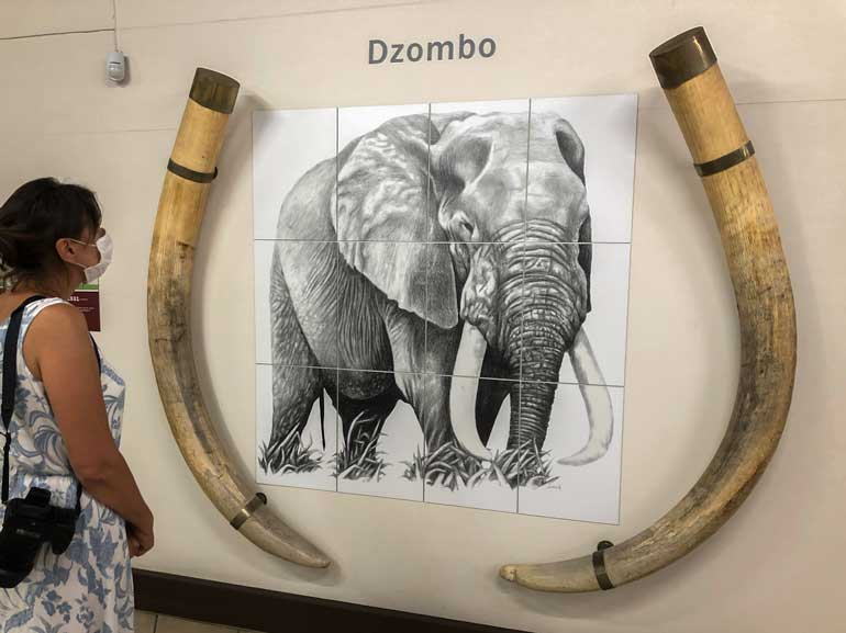 Elephant-Museum-