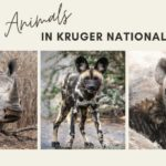 Animals in Kruger National Park: A World of Beauty and Brutality