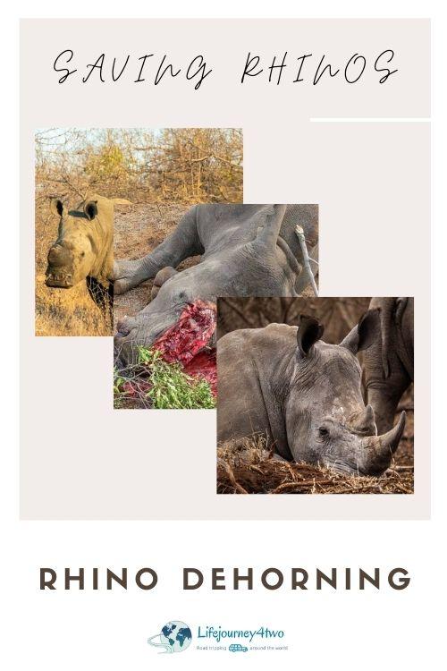 rhino dehorning pinterest pin