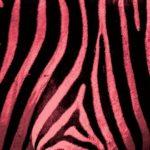 red-Zebra-print