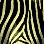 yellow-Zebra-print
