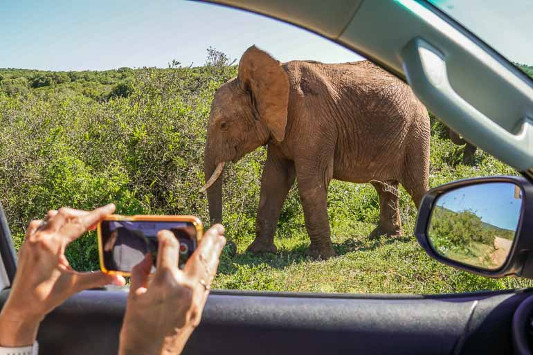 kruger safari accessories mobile phone for images