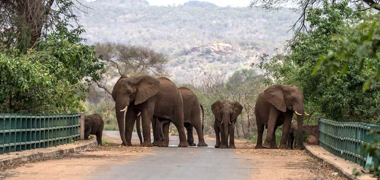 Elephants-on-bridge-at-Punda-Maria