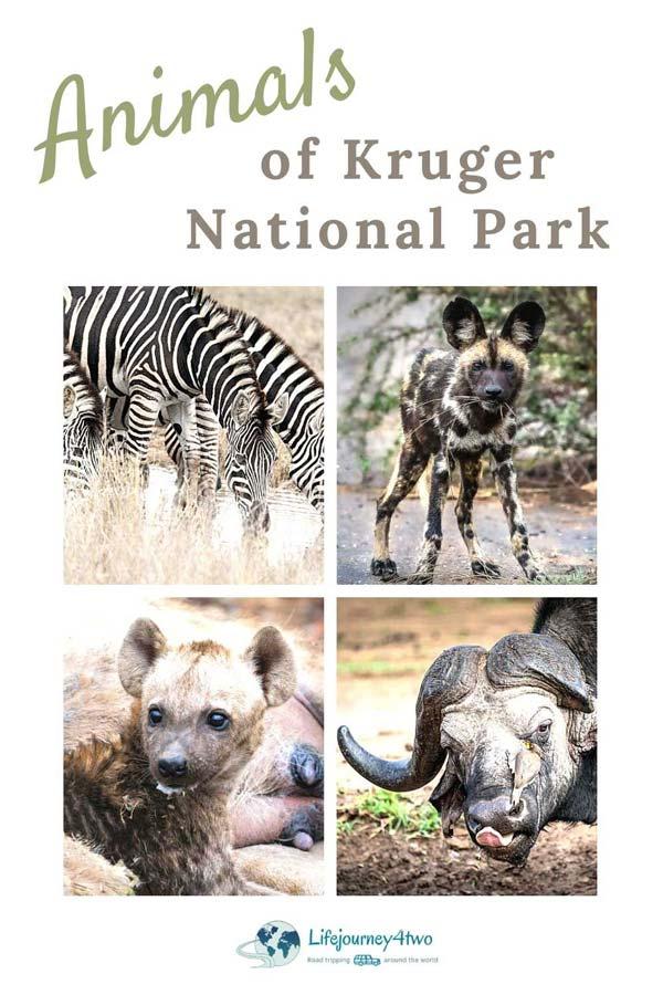 Animals-in-Kruger-National-Park-pinterest-pin