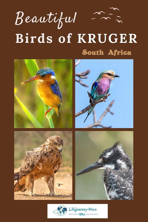Birds-in-kruger