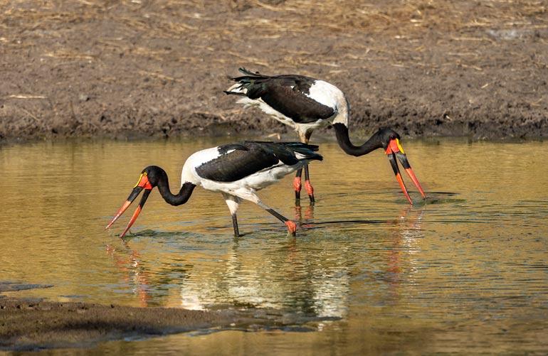 Birds in Kruger National Park