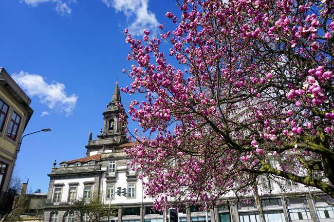 porto-cherry-blossom