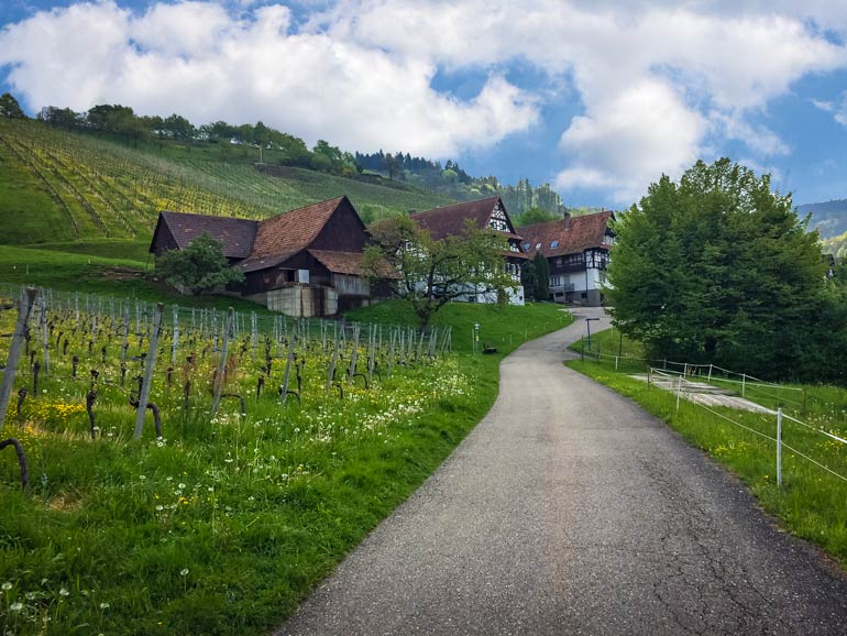 small path leading towards half timbered houses with vineyards either side in Sasbachwalden Germany